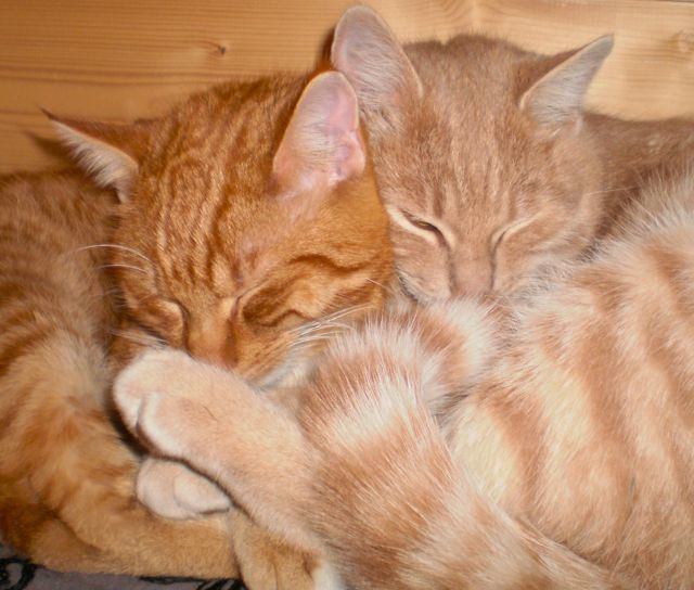 cats, togetherness, connection, love cats, kitty cuddles, touch, touching, stroking fur, loving, loneliness, no more loneliness, banish loneliness, full of life